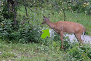 watching the deer eating apples while drinking coffee