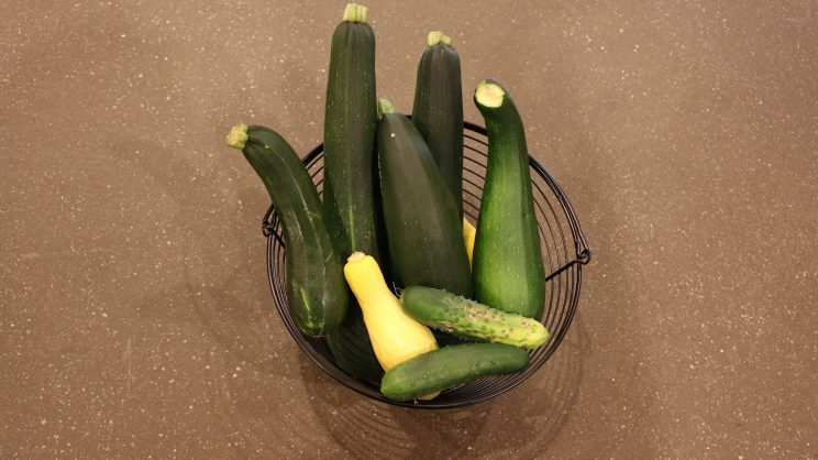 basket full of fresh zucchini