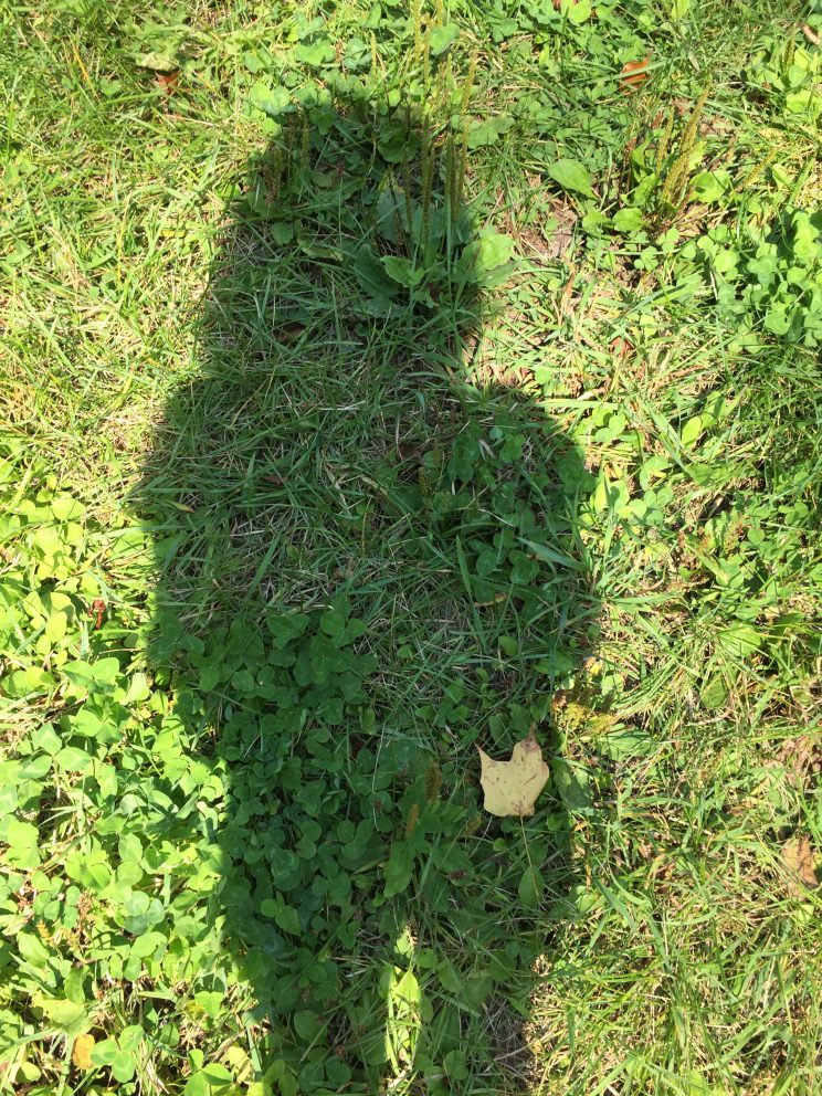 Shadow of image of the boss
