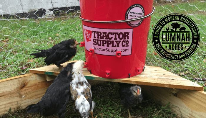 5 Gallon Automatic Chicken Waterer For The 30 Chicken