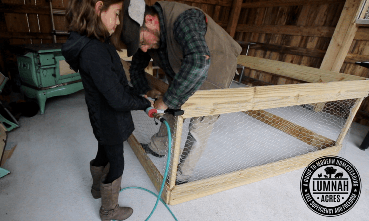Stapling the chicken wire on to the $30 chicken coop