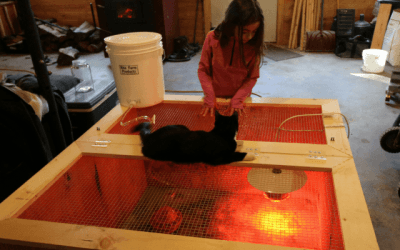 Best Chick Brooder ~ Build It In 30 Minutes for $30 ~ Directions and Material List